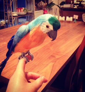 新鳥3.jpg